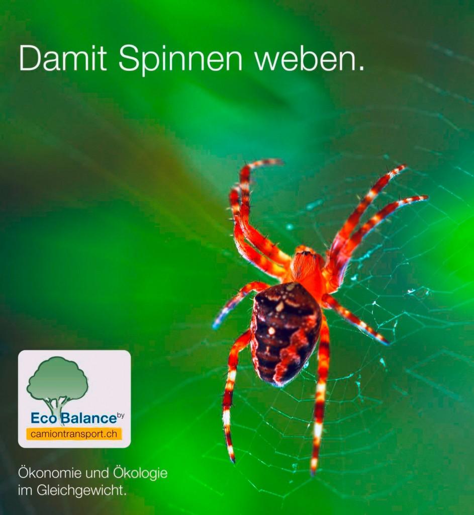 Damit-Spinnen-weben